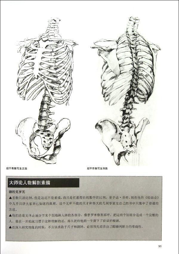 儿童腿部骨骼结构图