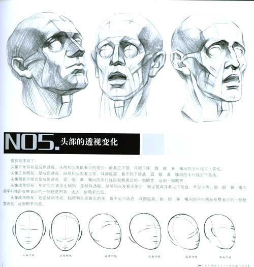 颈部结构与肌肉 第一节