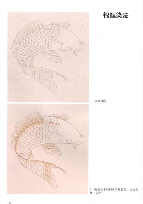 目录 鱼的结构 鲤鱼的结构染法 鲤鱼的勾线方法 鲤鱼