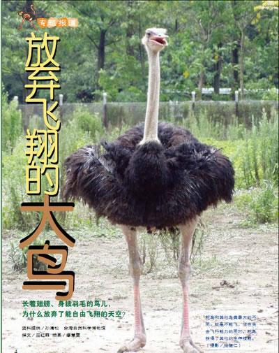 这些和哺乳动物一起演化的不会飞的鸟儿