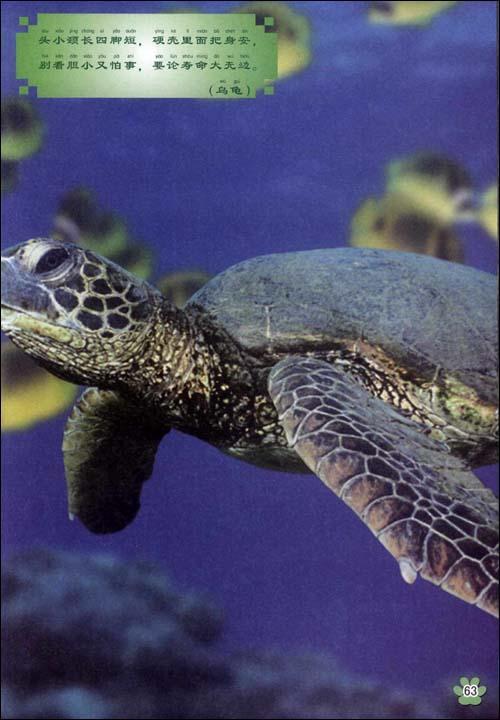 第二章  爬行动物和两栖动物 蜥蜴 蛇 青蛙 乌龟 变色龙 鳄鱼 蚯蚓 第