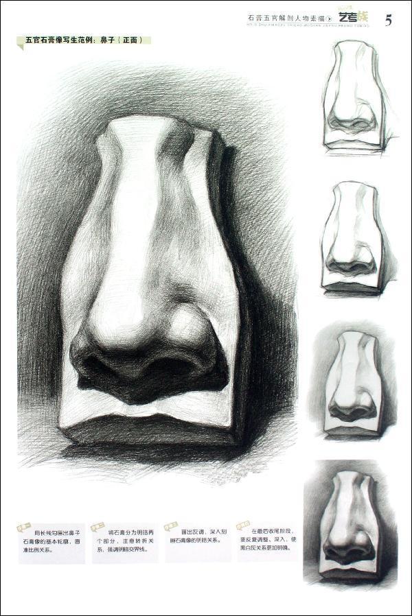 石膏切面人像与解剖人像写生范例人物素描局部写生范例――眼睛人物