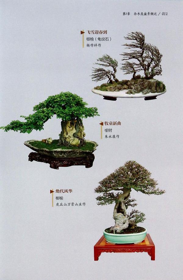 宁夏榕树投资管理