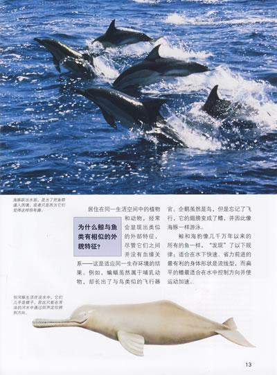 起源和身体结构 鲸的